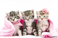 """Laden Sie das lizenzfreie Foto """"Katzenbabies"""" von Claudia Paulussen zum günstigen Preis auf Fotolia.com herunter. Stöbern Sie in unserer Bilddatenbank und finden Sie schnell das perfekte Stockfoto für Ihr Marketing-Projekt!"""