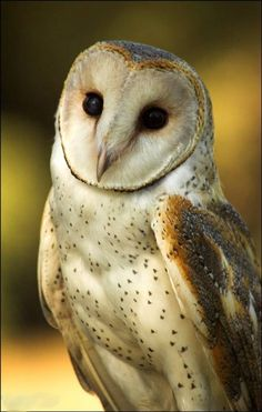 Beautiful and Majestic Owl ❤️❤️❤️