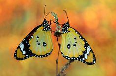 Love ... by Mustafa Öztürk on 500px
