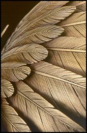 Grainger McCoy Wing Detail. Great reference for carving feathers.