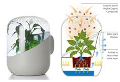 ANDREA, plant based air purification by andreaair.com/