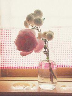 やわらかい時間: 菊とバラ