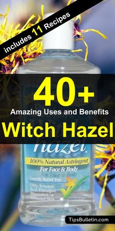 40 Amazing Witch Hazel Uses and Benefits. With detailed tips on using witch hazel for acne, face, beauty, as a toner for skin, in combination with essential oils and also for dogs and plants. Includes eleven witch hazel recipes and remedies tips.