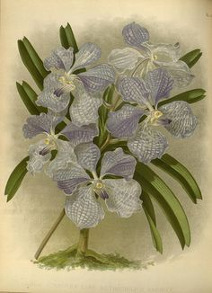 Orchid album :.London :B. S. Williams,1882-97..