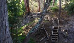 Visit the last remaining afro-montane forest in the Overberg at Platbos, just 30 minutes drive from Stanford Valley