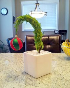 """""""Grinch Tree"""" - So Easy!    Lemon Cypress tree, small pot, white stones or anything that imitates snow (I used white stone bedding commonly used in fish tanks), green craft wire to hold desired shape and finish with an x-mas ornament :D *water twice a week*"""