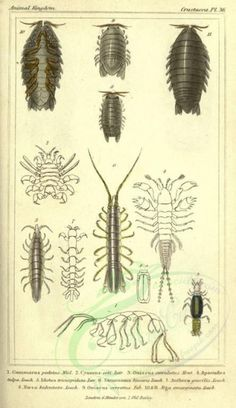 - high resolution image from old book. Book Clip Art, Old Book Pages, Art Clipart, Picture Collection, Wall Collage, Vintage Prints, Animal Kingdom, Vintage Black, Insects