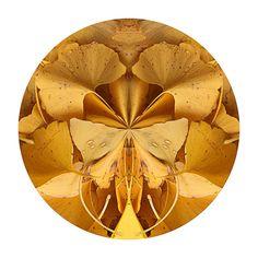 Ginkgo Autumn II by Greg Miller-Hard