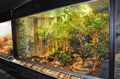 Large Reptile Terrariums