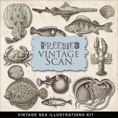 Freebies Vintage Sea Illustrations Kit