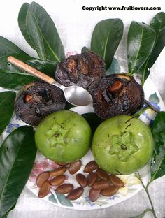 Chocolate Sapote: Rare Fruit Seeds and Exotic Tropical Fruit Seeds