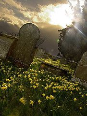 spring in the cemetary
