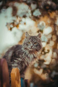 ...Beautiful cat