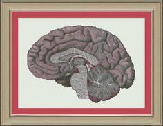 Human brain crosssection cool anatomy by nerdylittlestitcher, $3.00                                                                                                                                                                                 More