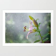Stargazer Lily 2845 Art Print by metamorphosa - $22.88