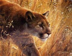 cougar - puma - mountain lion - painting by Carl Brenders - The Predators Walk