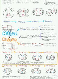 Confira uma mapa mental incrível sobre Mitose e Meiose, estude o assunto e prepare-se para o Enem e vestibulares! Study Biology, Teaching Biology, Mitosis, Med Student, Student Life, School Motivation, Study Motivation, Study Help, Study Tips