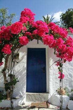 Wonderful Bougainvillea Trellis Ideas Bougainvillea Vines – Elegantly Twine Up a Trellis Wonderful Bougainvillea Trellis Ideas. Bougainvillea has been considered as one of the bright and colo… Bougainvillea Trellis, Ab Ins Beet, Beautiful Flowers, Beautiful Places, Tomato Garden, Deco Floral, Colorful Garden, Colorful Plants, Garden Landscaping