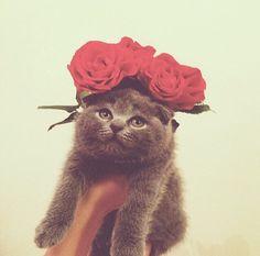 ilovedotcat:  猫の花束