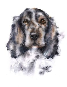 Cocker spaniel painted by watercolour artist Jane Davies:
