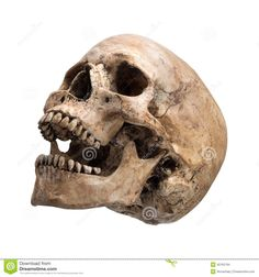 Sidetview Human Skull Open Mouth Isolated - Download From Over 27 Million High Quality Stock Photos, Images, Vectors. Sign up for FREE today. Image: 40765794