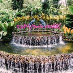 Instagram-worthy places in Singapore: National Orchid Garden Singapore Travel Tips, Singapore Itinerary, Singapore Photos, Asia, Orchids Garden, Instagram Worthy, Wanderlust Travel, Places To See, Travel Inspiration