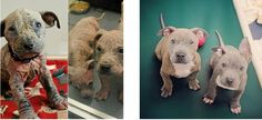Tater and Tot have been fixed and are practically ready for their new forever home.