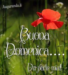 Favorito Tutorial and Ideas Italian Greetings, Catholic Religion, Good Morning, Cards, Genere, Anna, Sunday, Buen Dia, Photos