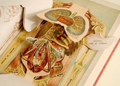 A pop-up book from Animated Anatomies, a new show at the Perkins Library at Duke University