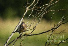 Eye on the Sparrow by Belinda Greb  #birdphotography #naturephotography