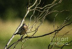 Eye on the Sparrow by Belinda Greb #birdphotography #naturephotograph