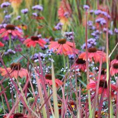 Prairie Garden, Sensory Garden, Vertical Farming, Garden Borders, Garden Plants, Garden Grass, Colorful Garden, Verbena, The Great Outdoors