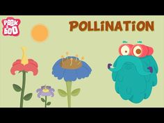 Parts of a flower and Pollination | The Dr. Binocs Show | Learn series for kids - YouTube
