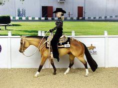 model horse at a jog, feet are diagonal Western Pleasure by Susan Hargrove