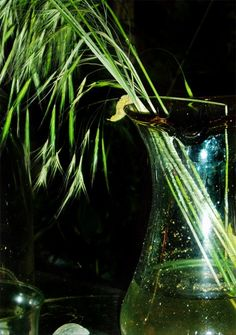 Kornpflanze in Glasvase - patchwork impressions