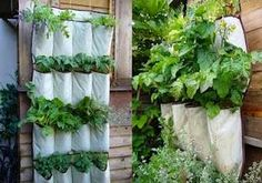 When the Dinner Bell Rings: Getting Hung Up on Herb Gardening