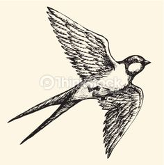 Vector drawing of a series of monochrome sketches 'Birds'. The swallows and martins are a group of passerine birds in the family Hirundinidae which are characterised by their adaptation to aerial...