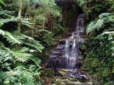 Área Protegida Municipal Microcuenca El Chape