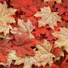 Assorted Fall Silk Maple Leaves