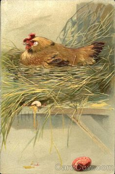 Chicken sitting on her nest With Chicks