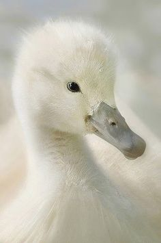 How adorable is this white fluffy feathered little darling♡