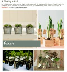 herb/plant  enter pieces and favors