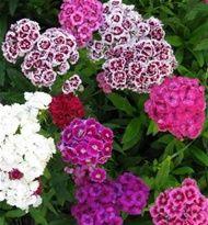 harjaneilikka Garden Ideas, Plants, Landscaping Ideas, Plant, Backyard Ideas, Planets