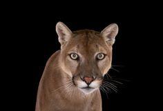 Fotógrafo clica animais selvagens olhando diretamente a câmera (é um pouco intimidador) | Virgula