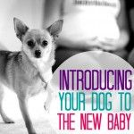 Long before having babies, many people are already parents to their beloved four-legged friend. Are you the proud parent of a fur baby? If so, once you're expecting, you may find yourself with concerns over how your dog will react to the new addition to the family. Will you still be able to give