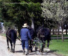 Amish Love...
