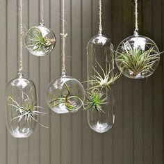 Image from http://1.bp.blogspot.com/-eGuPQ3vRfXQ/UQk36g4R6OI/AAAAAAAAFww/S6CBgWDrBWg/s640/http-__theidesignbox_com_2011_04_14_add-a-little-green-with-air-plants_.jpg.