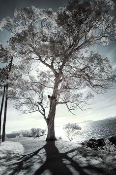 Iridiscent tree by Cobu Lasde on 500px
