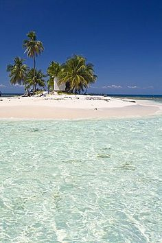 Palm trees on beach, Silk Caye, Belize, Central America Honduras, Napa Valley, Dream Vacations, Vacation Spots, Trinidad E Tobago, Belize Travel, Santa Lucia, Beaches In The World, South America Travel
