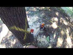 #treesurgeonliverpool tree work liverpool